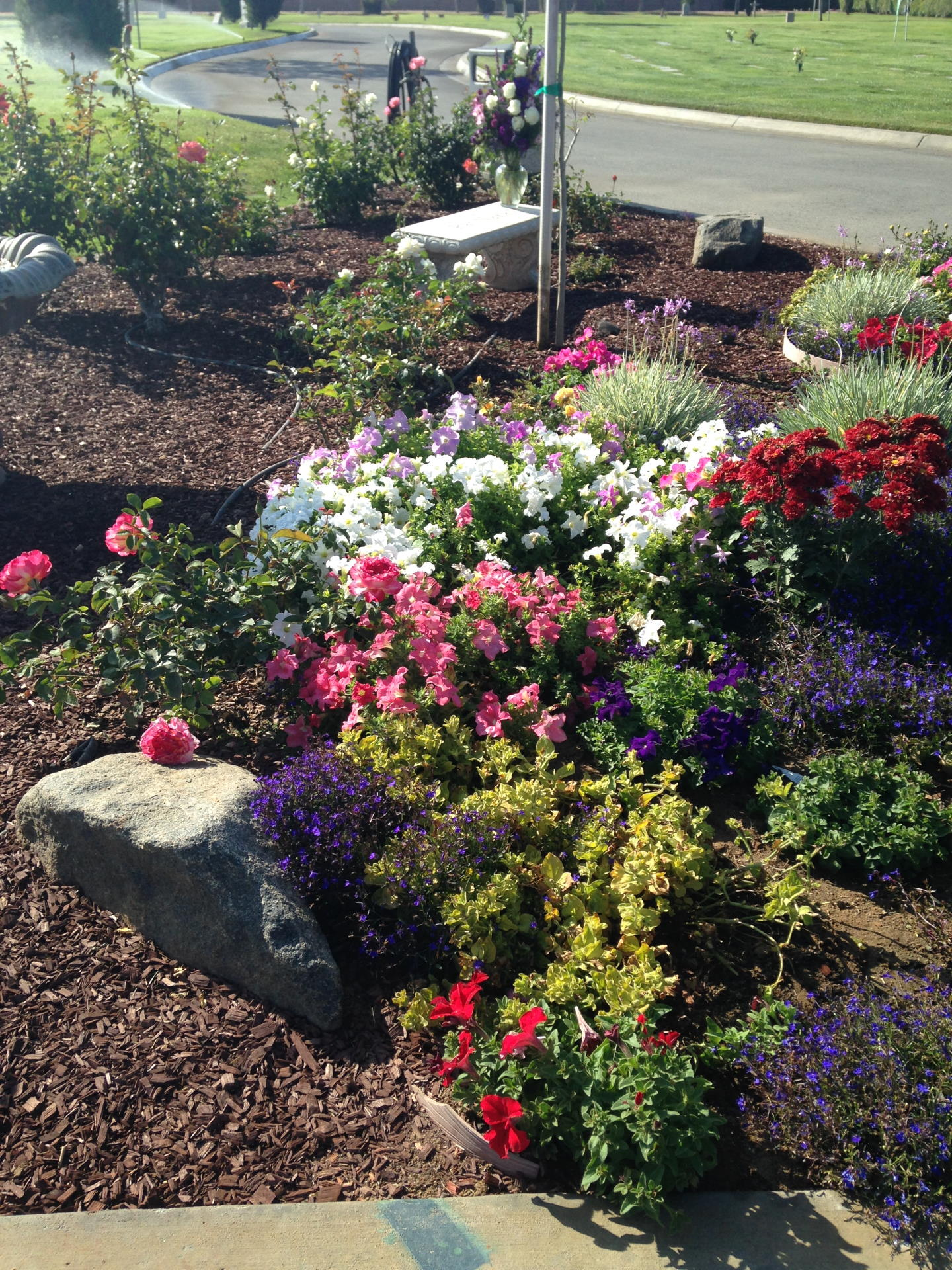 flower bed with blooming plants