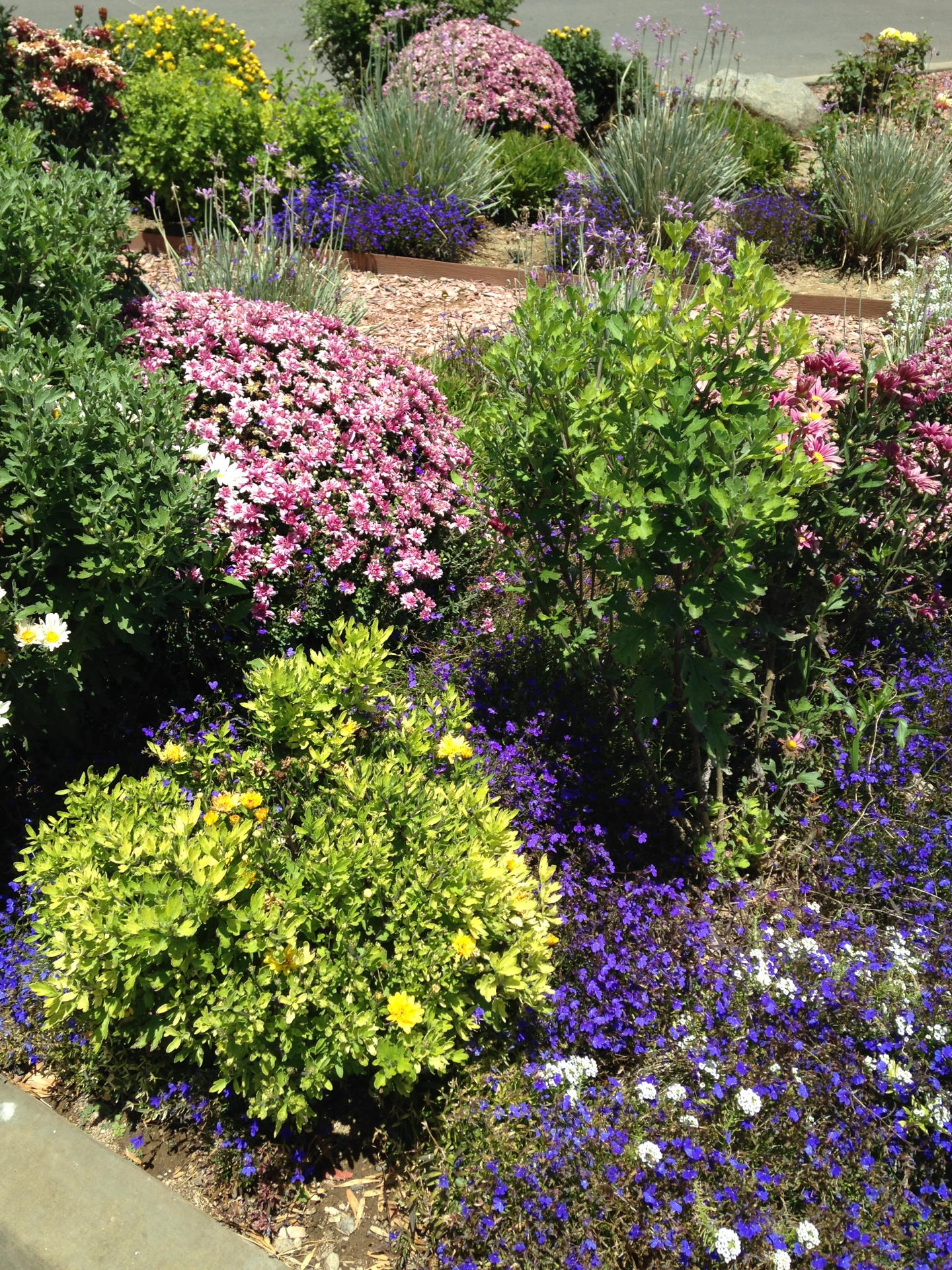 flowering bushes and plants